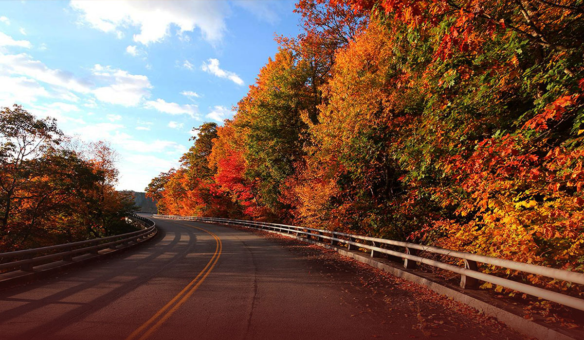 Why Climate Change is making it Tough to Chase Fall Foliage