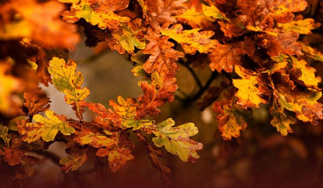 Why Climate Change is making it Difficult to Chase Fall Foliage